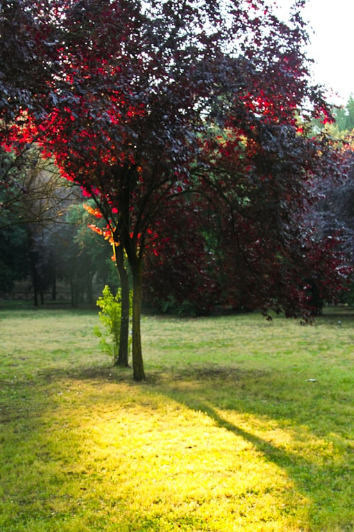 4c - villa borghese park