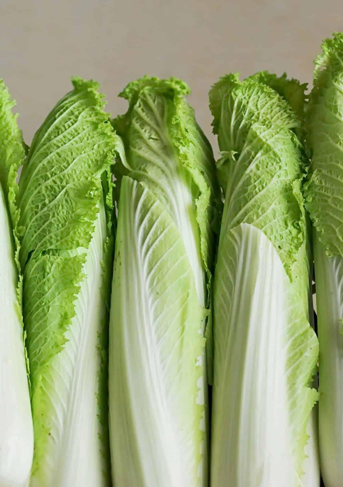 Napa cabbage gathered together.